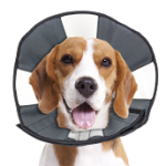 ZenCone Medium Beagle-B